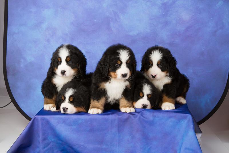 2013-Pearson Pups-Jun02-0314.jpg