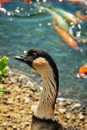 Gooseneck Waterfowl Sanctuary