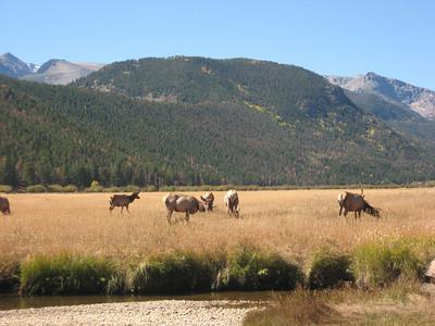 Rocky Mtn. National Park Sept. 2010
