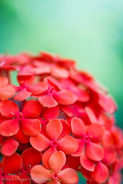 zoo_flowers-8.jpg