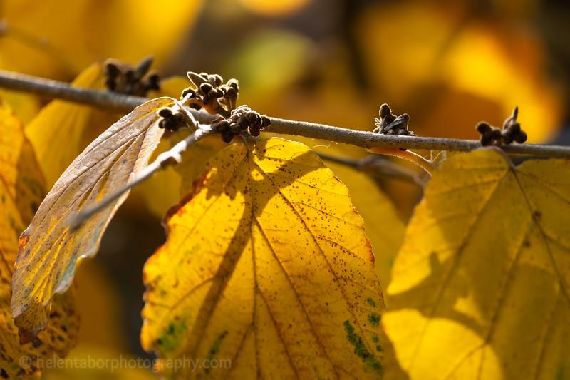 Himalayan Garden Oct 18-4.jpg