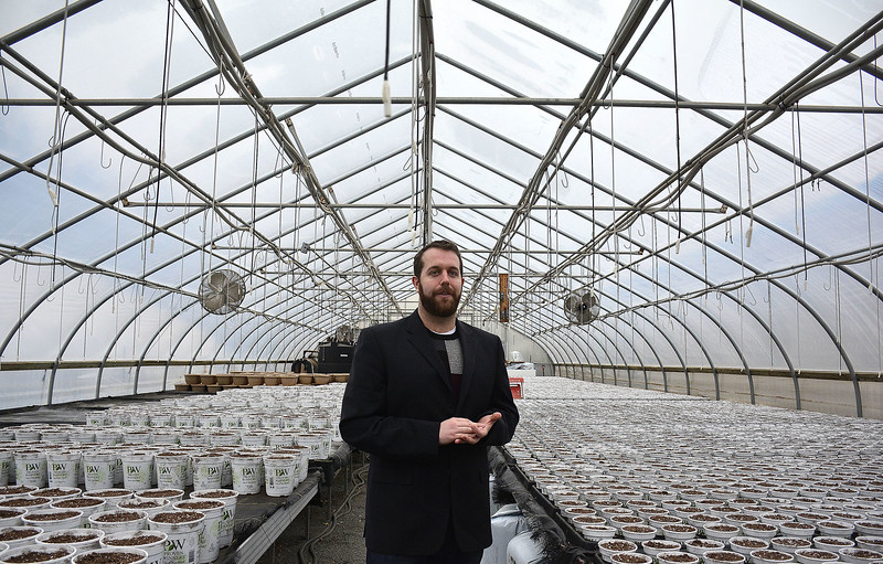 2/24/2016 Mike Orazzi | Staff Bryan Stolz in one of the greenhouses at Winterberry Landscape Garden Center in Southington.