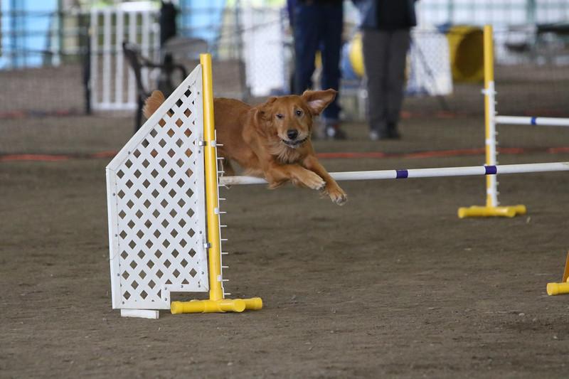 3-10-2019 Bloodhound-0281.jpg