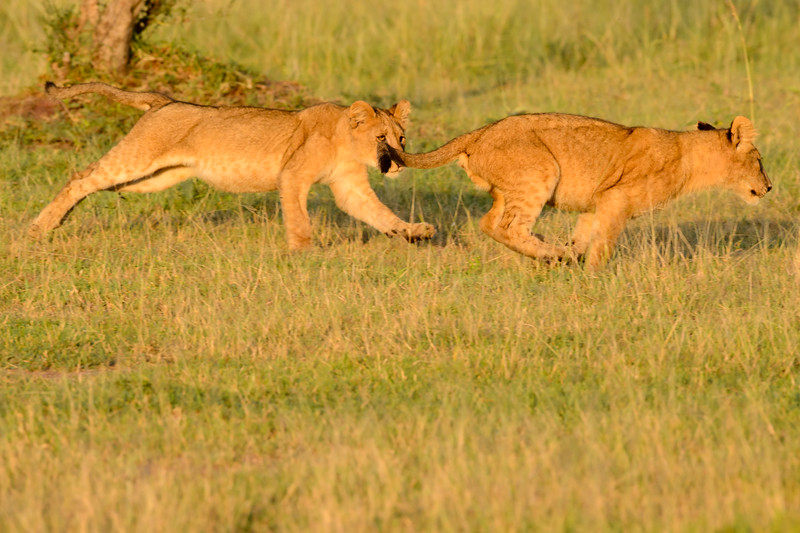 20160215__KET7578_Serengeti_Day_7.jpg
