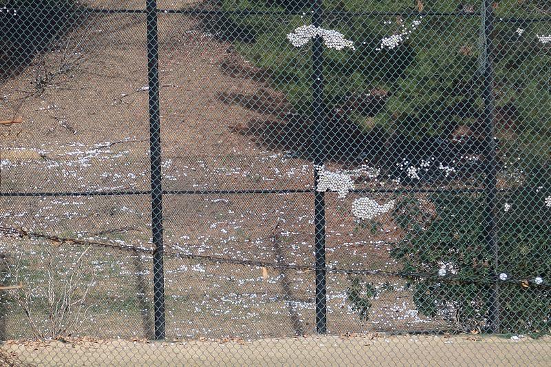 Griffith Park 186.jpg