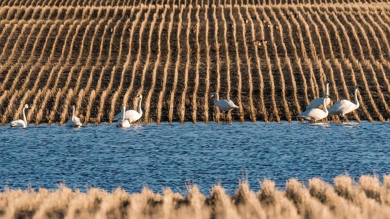 barley 13.jpg