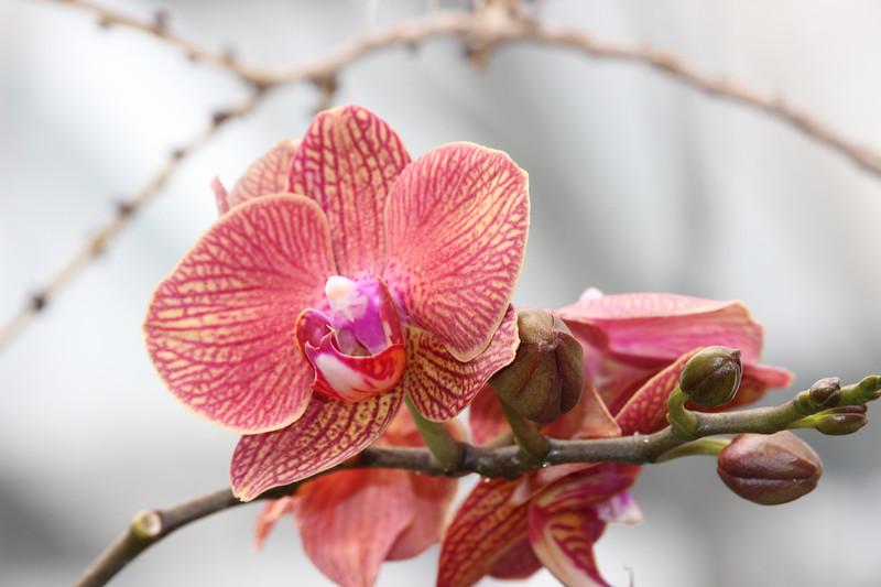 KoRedfield-Floral48.jpg