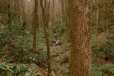 Bear Creek Loop DGO