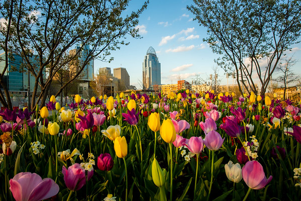 Cincinnati Spring 2020