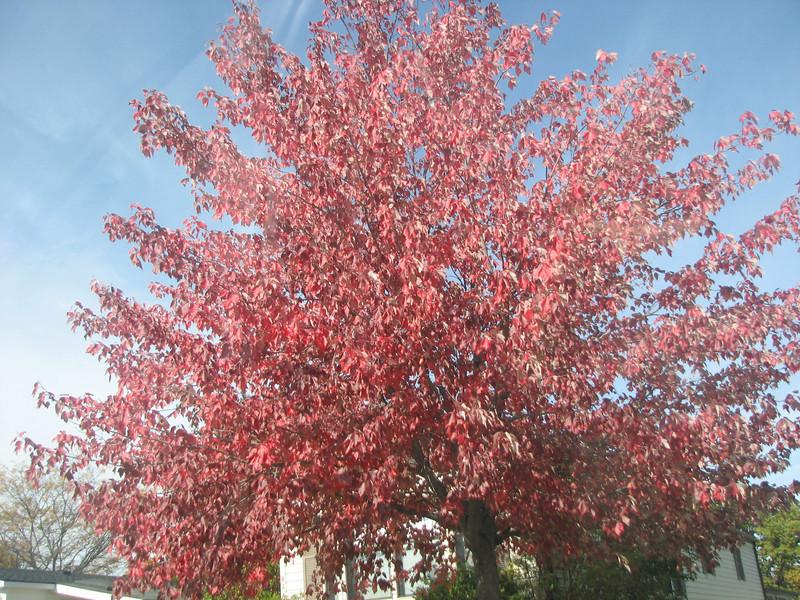 Fall pics 2008 008.jpg