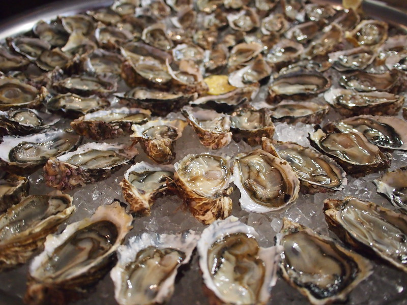 P4305707-oysters.JPG