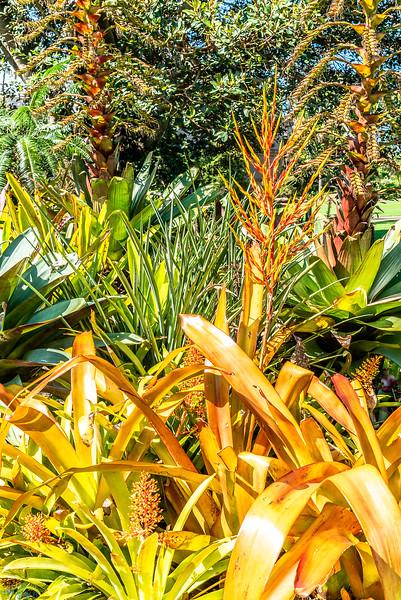 Royal-Botanic-Garden-1040.jpg