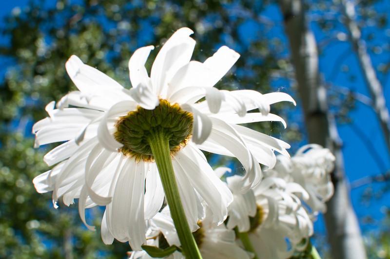 flower_280.jpg