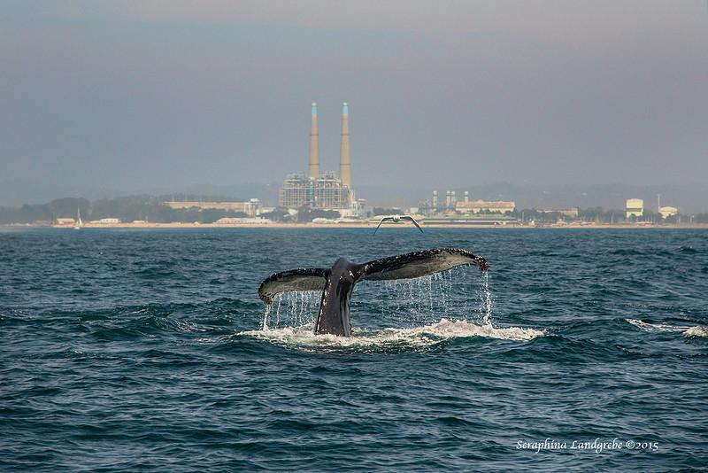 _DSC9210Seraphina Moss Landing whale.jpg