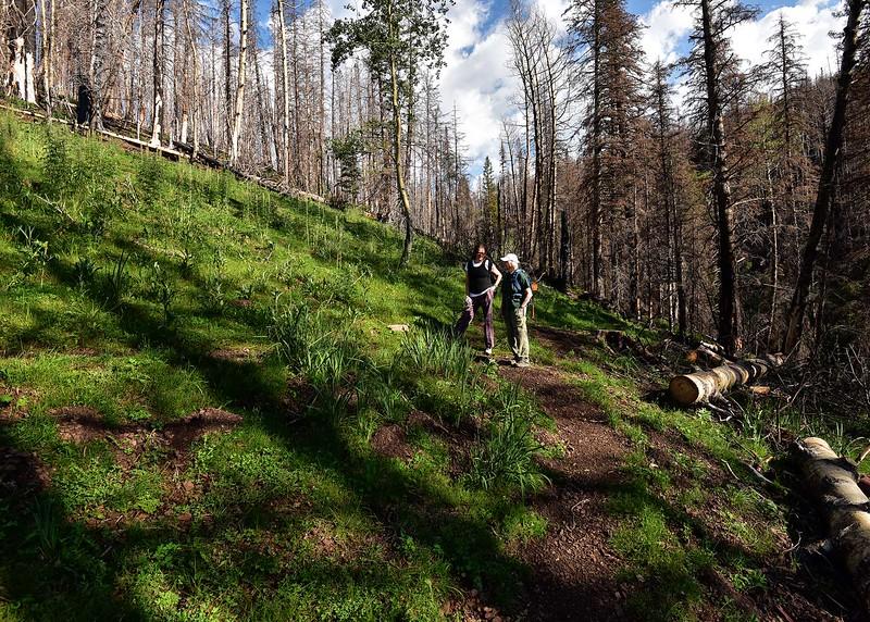 NEA_0329-7x5-Hikers.jpg