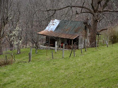 Old homestead along here with pear trees blooming in Dry Valley