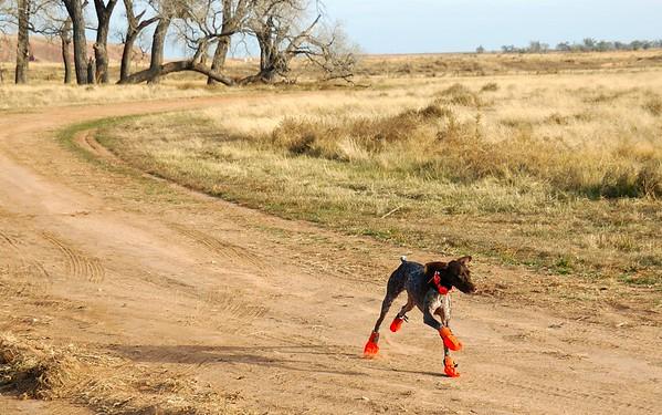 2008 Kansas Pheasant Hunt