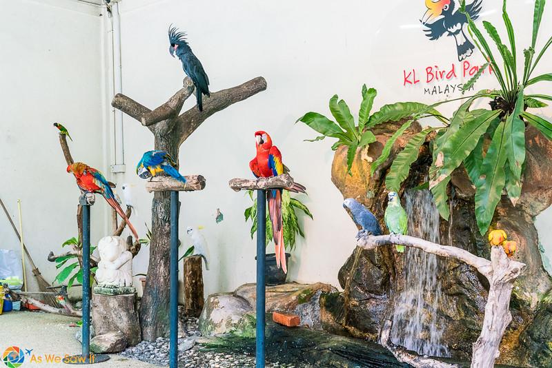 KL-Bird-Park-00461.jpg