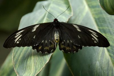 Niagara Falls Butterfly Café