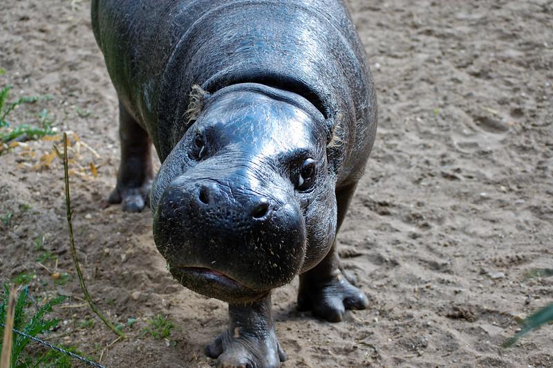 Arnhem_Burgers Zoo-14.jpg
