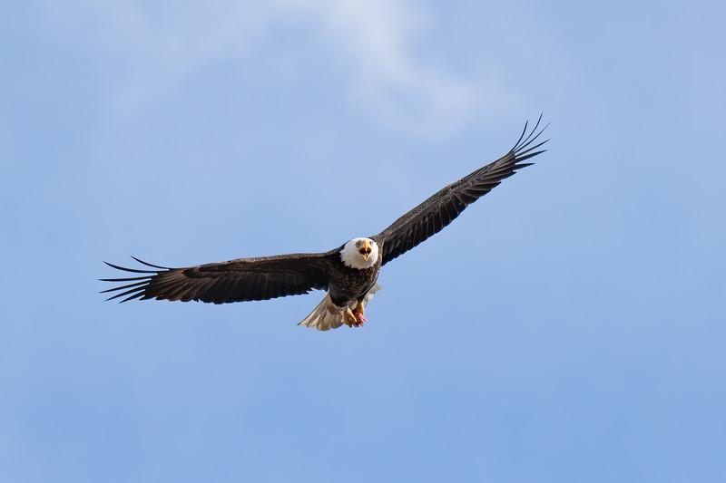 Eagle  1AE No WM-4.JPG