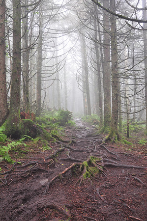 Grayson Highlands/ Mt Rogers National Recreation Area