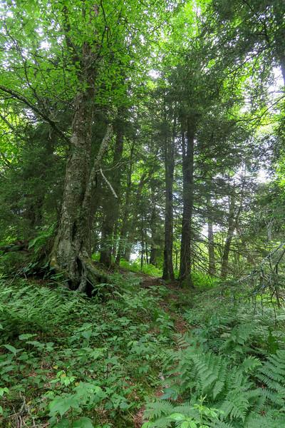 Green Mountain Trail -- 5,400'