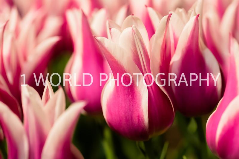 Navy Pier Chicago Flower and Garden Show-141-2-10.jpg