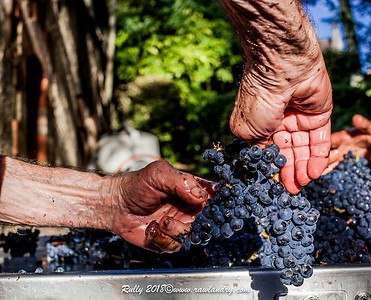 GRAPES AND HANDS