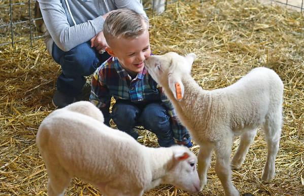 Baby Animals at Hancock Shaker Village - 041419