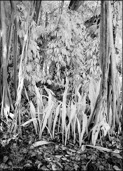 20090215-banyan tree_4207.jpg