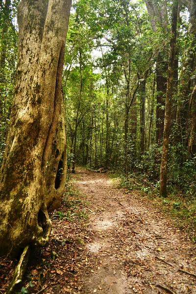 walking path through forest