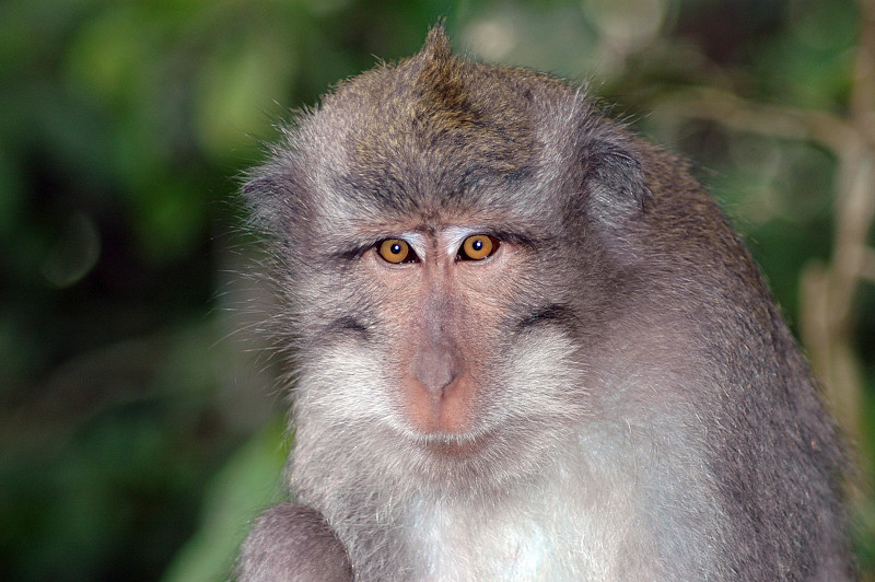 Bali Monkeys-2.jpg