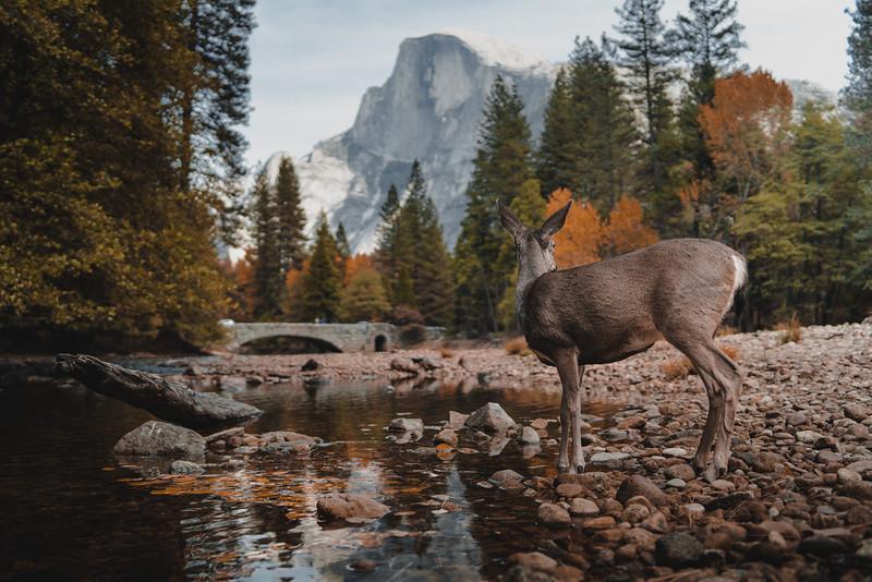 Essence of Yosemite