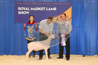 2017 RAWF Market Lamb Show Champions