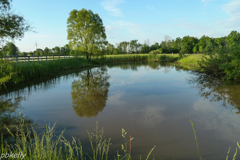 May 23.  Still pond in the early morning light.