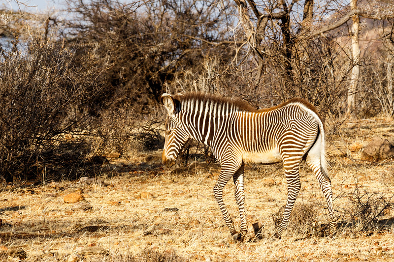 Kenya 2015-01465.jpg