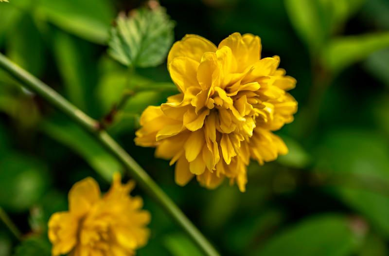 Spring flowers in the garden-83931.jpg