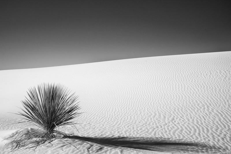 White Sands NP 2020-8.jpg