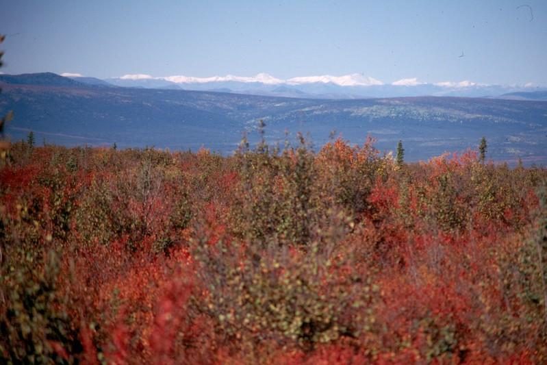 Artic tundra 2.jpg
