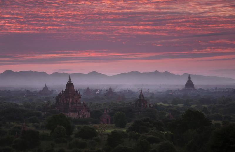 Bagan Birds
