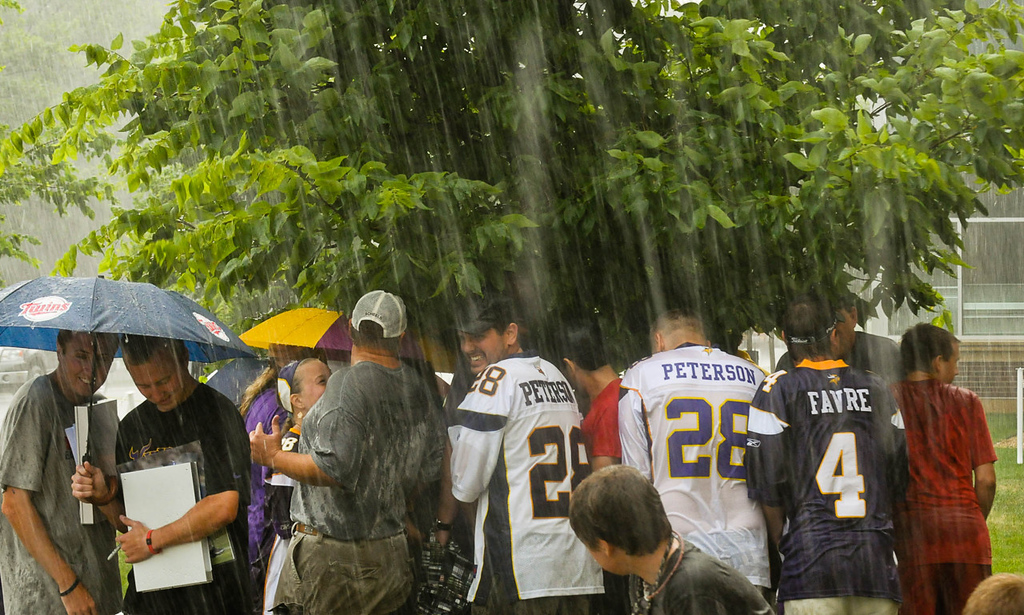 . A small tree provides scant cover during a heavy rainstorm for Vikings fans waiting for players to arrive at training camp.  (Pioneer Press: Ben Garvin)