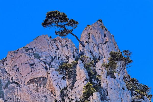 Calanques de Marseille - Arbres