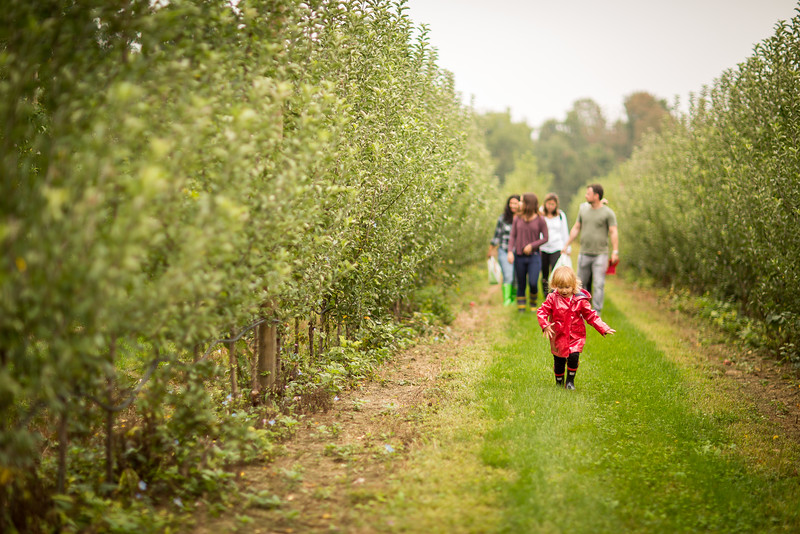Apple Picking - Terhune Apple Orchard