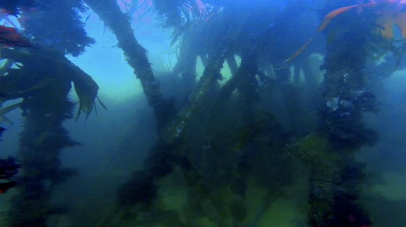 Devon-Underwater-15.jpg