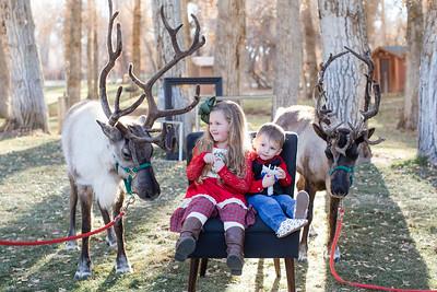 ReindeerAugare