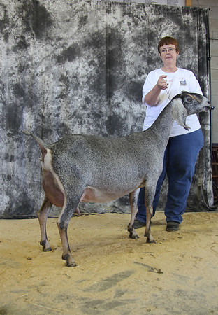 Doe Show Winners