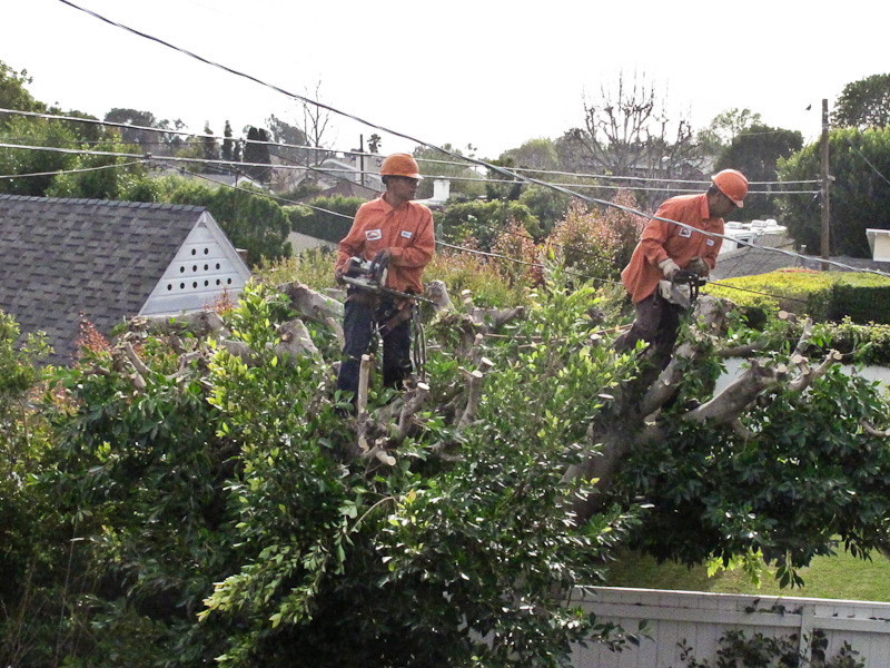 February 4 - Brave tree trimmers