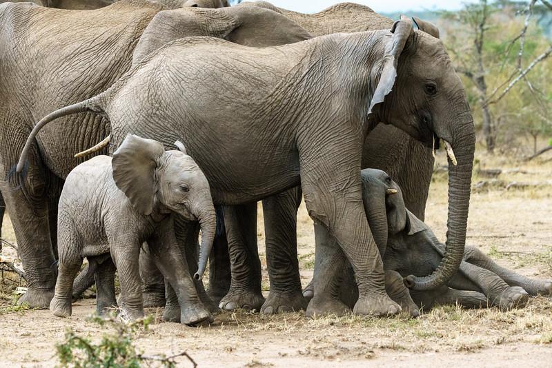 Kenya 2015-09251.jpg
