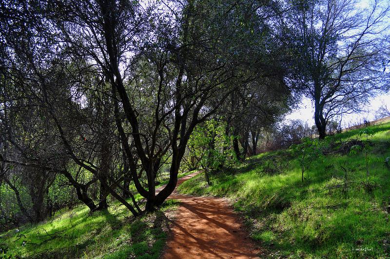 best path 3-1-2013.jpg